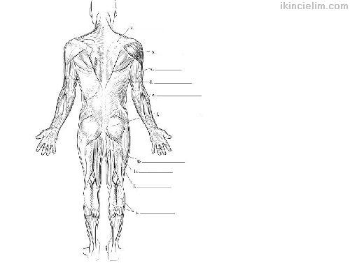 Anatomi Boyama Kitabı (Ingılızce)