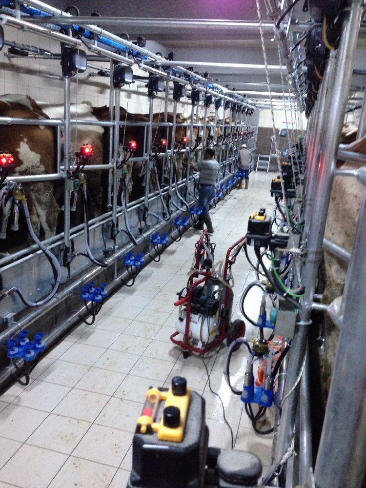 Süt Sağma Makinaları KURTSAN Sürü yönetim prog. Sağımhane Satılık 16x2 sürü yönetim programlı sağımhane
