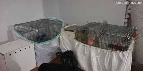 2 çift kafes