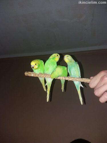 Ele Gelen Yeni yeme düşmüş yavru kuşlar